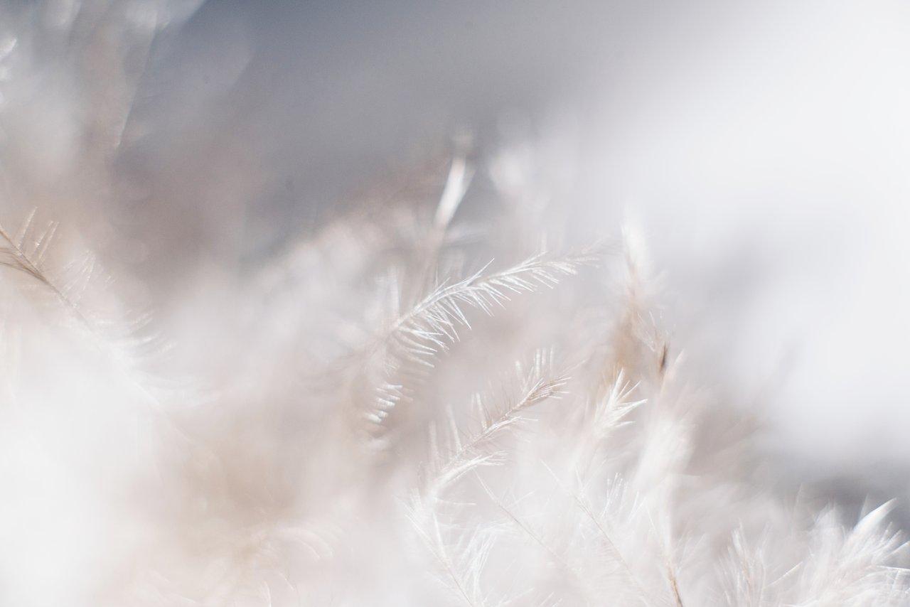 羽毛掛布団 種類